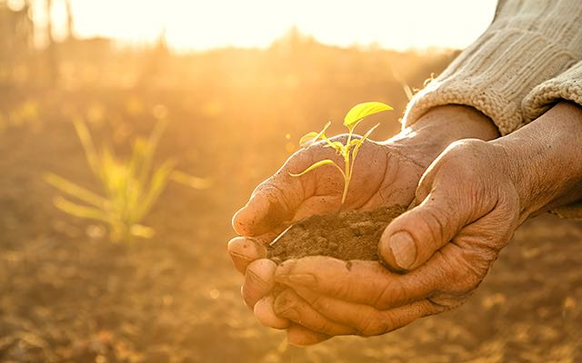 photo of two cupped hands holding a small plant in dirt