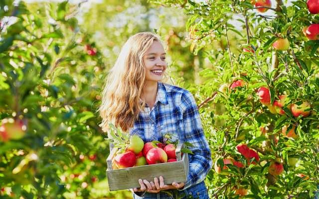 Photo of a woman standing in an orchard on a bright sunny day, holding a box of apples
