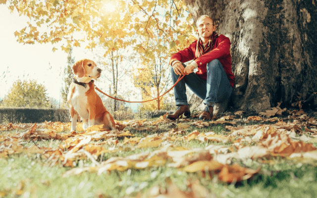 Man walks with dog in sunny autumn park