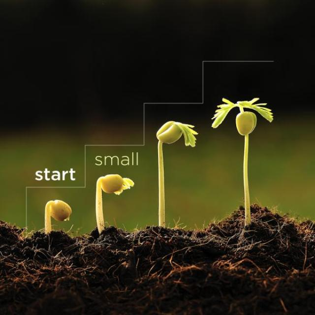 "Four little plant seedlings in different stages of growth. The one on the left has just started growing while the one on the right has a couple leaves. Text says: ""start small"""